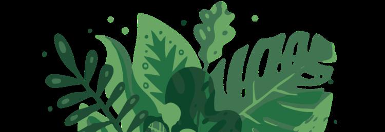 Roots-macaronesia-newsletter