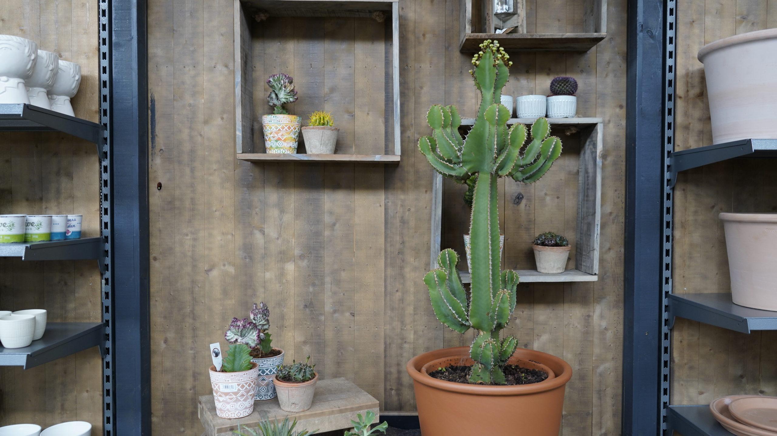 Roots Cactus 08