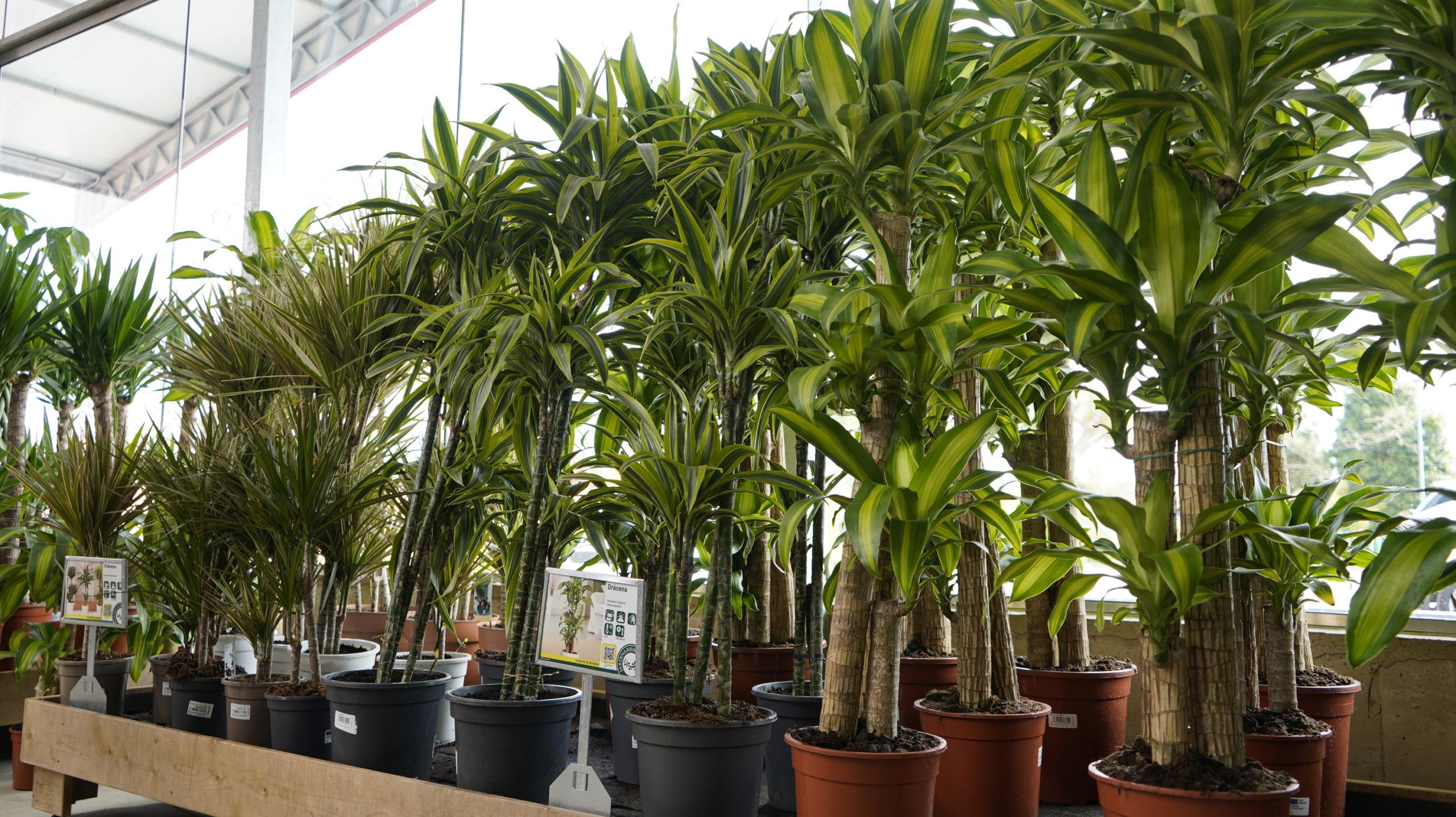 Roots Flores & Plantas 12