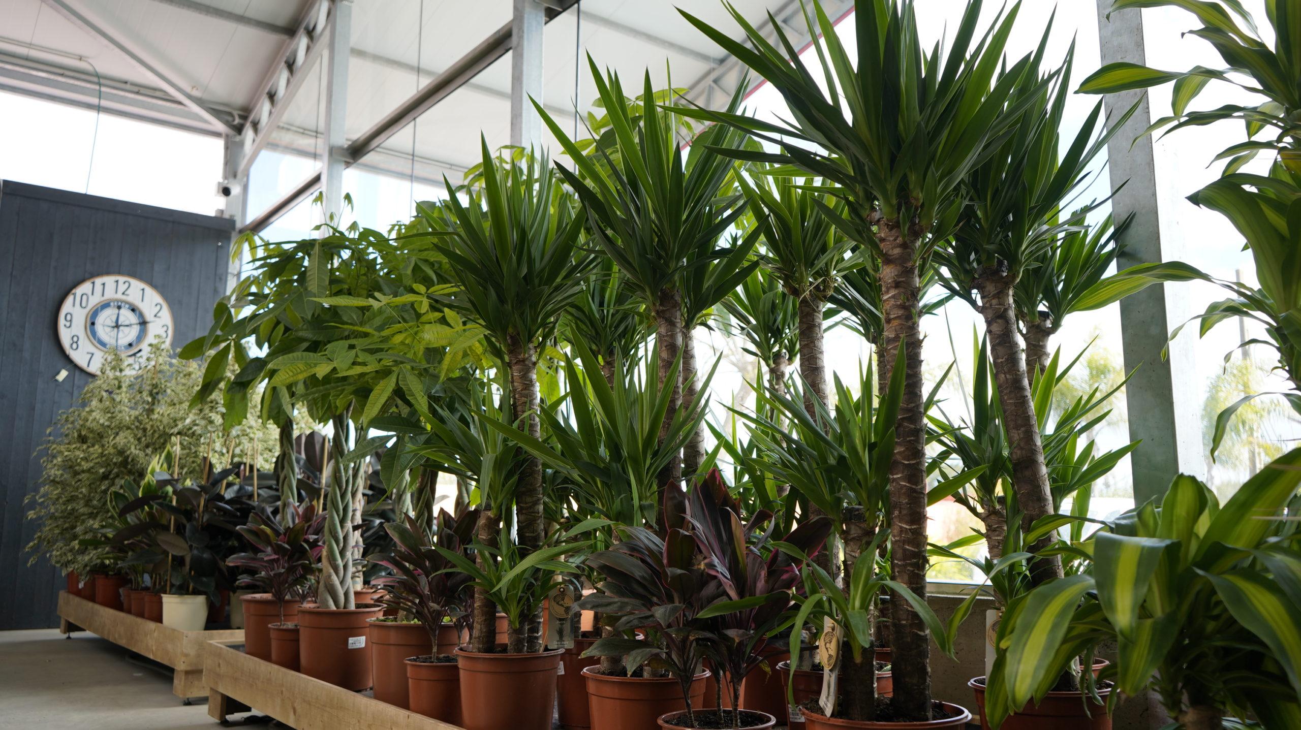 Roots Flores & Plantas 16