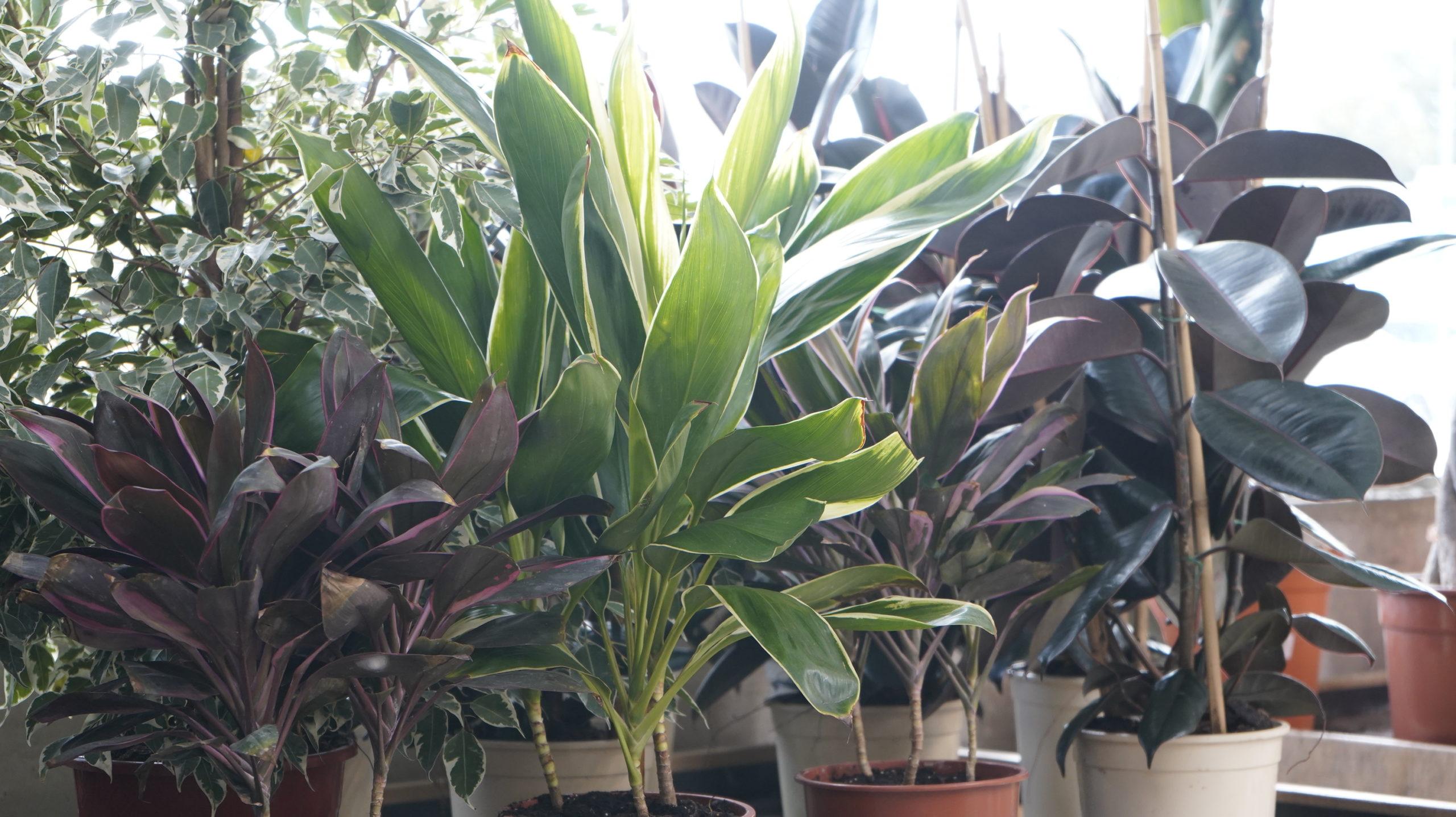 Roots Flores & Plantas 21
