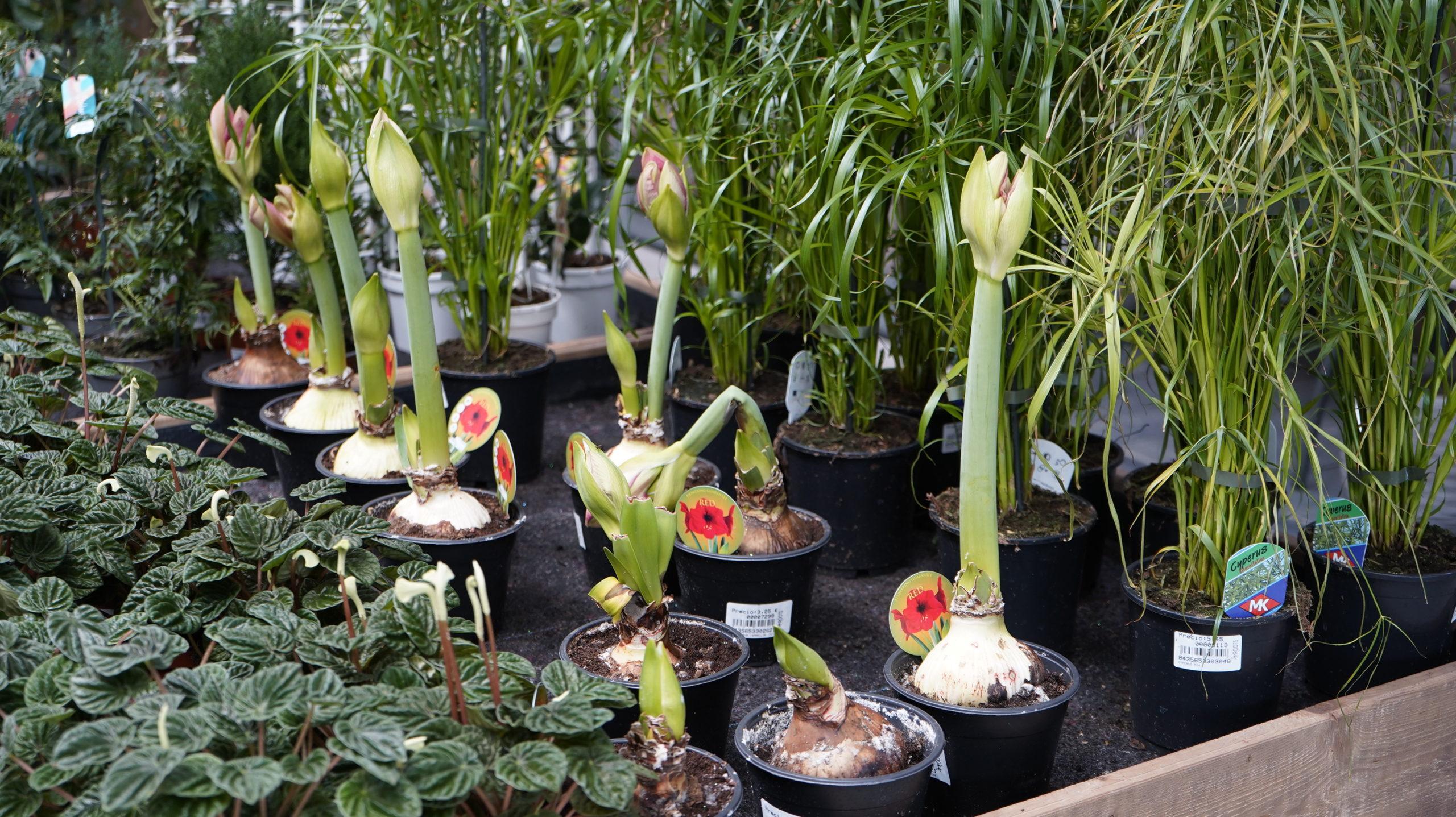 Roots Flores & Plantas 29