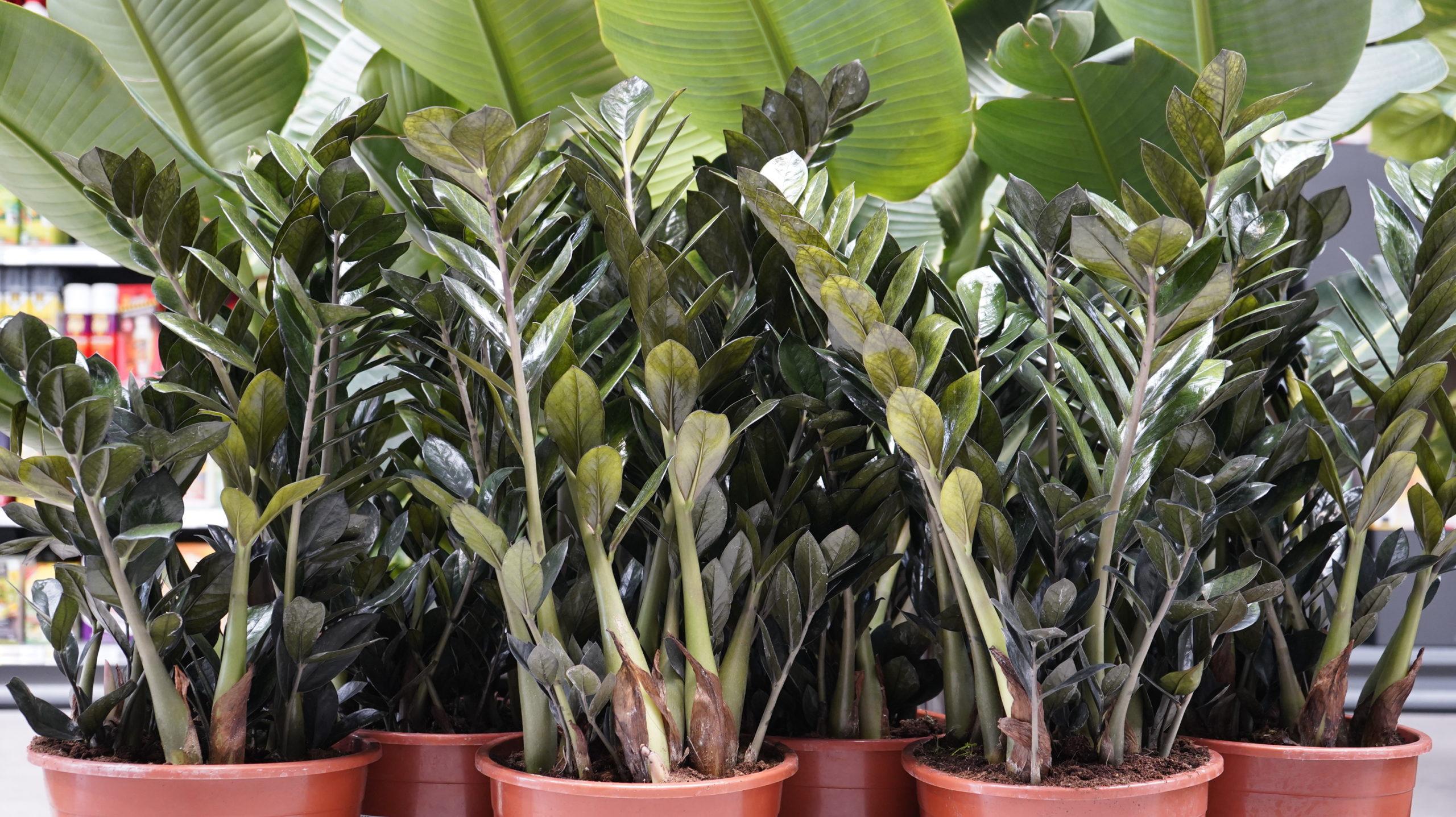 Roots Flores & Plantas 40