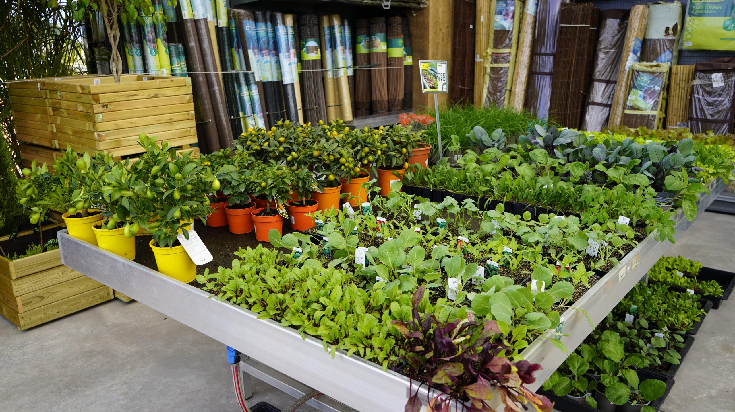 Roots Flores & Plantas 50