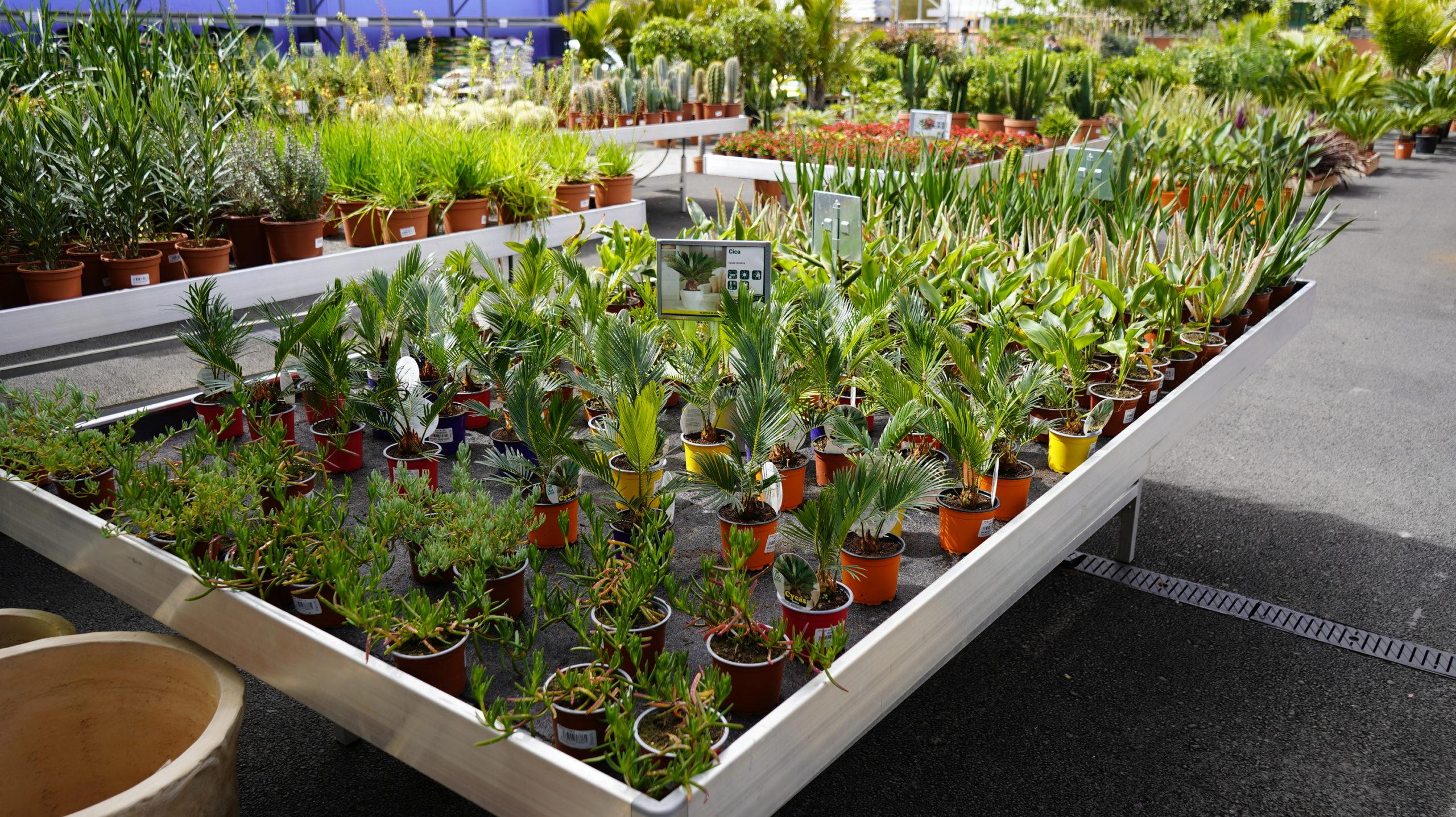 Roots Flores & Plantas 59