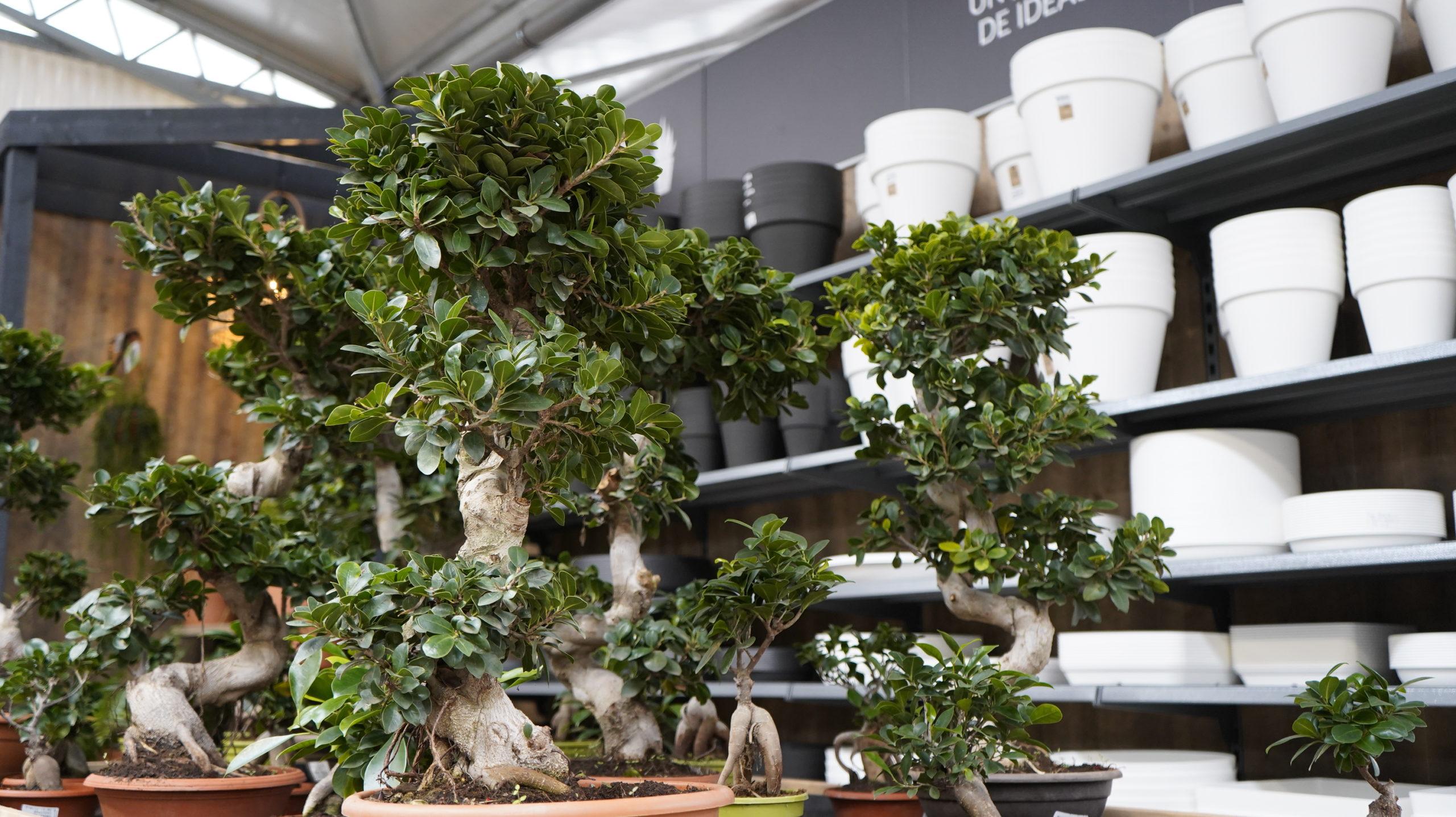 Roots Flores & Plantas 67