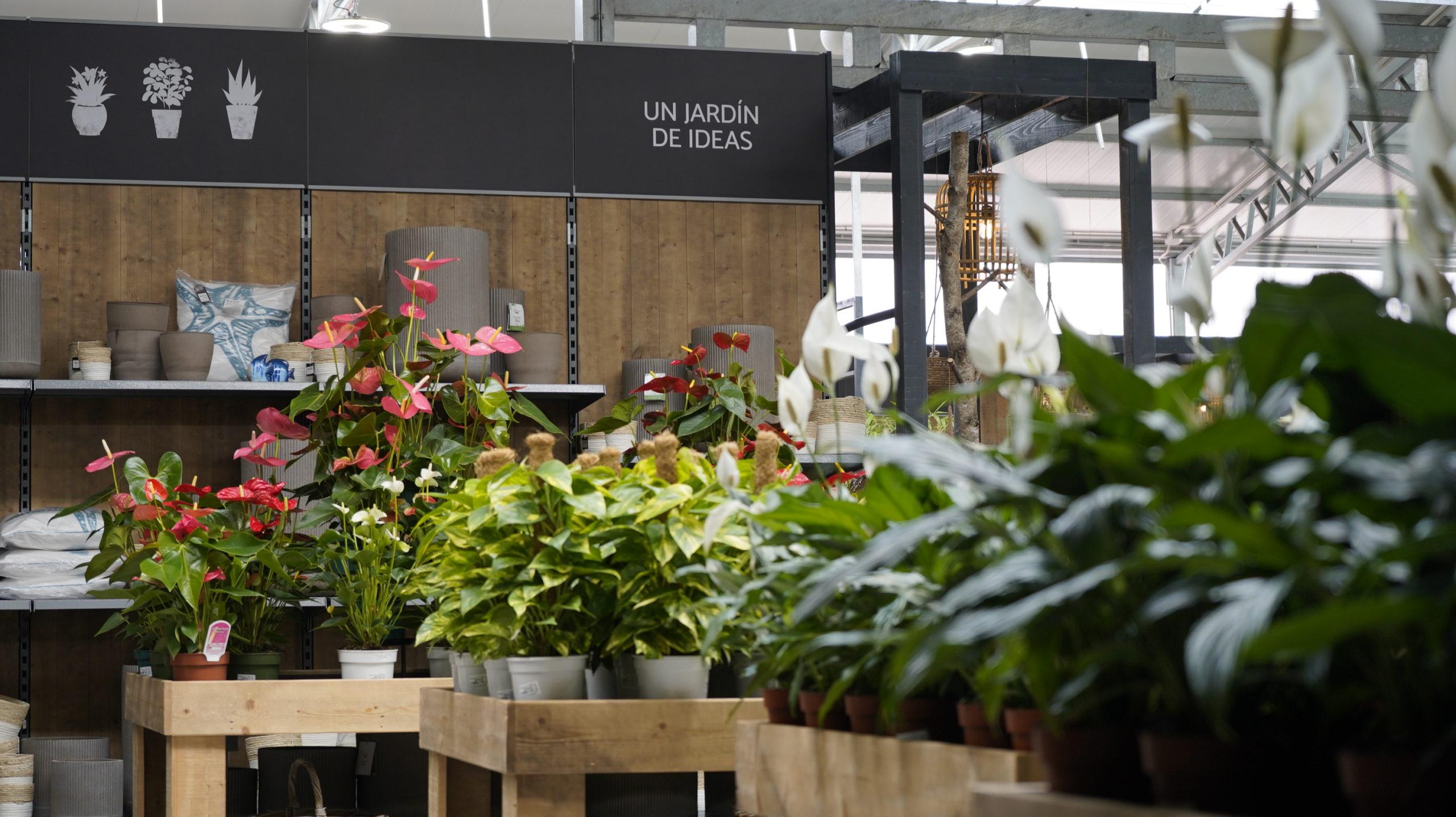 Roots Flores & Plantas Generales 05