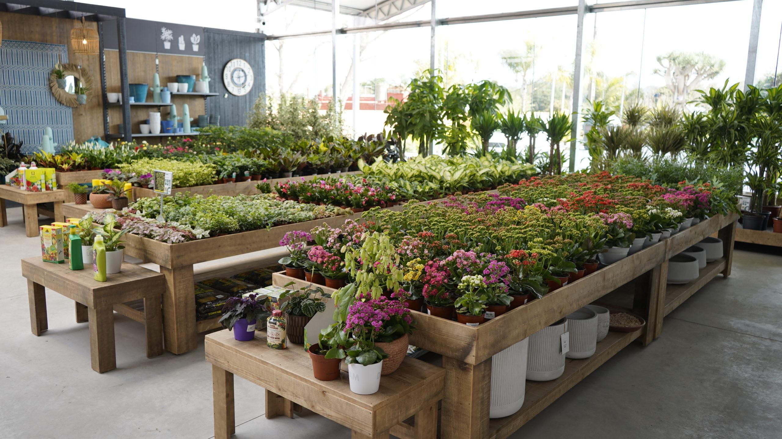 Roots Flores & Plantas Generales 07