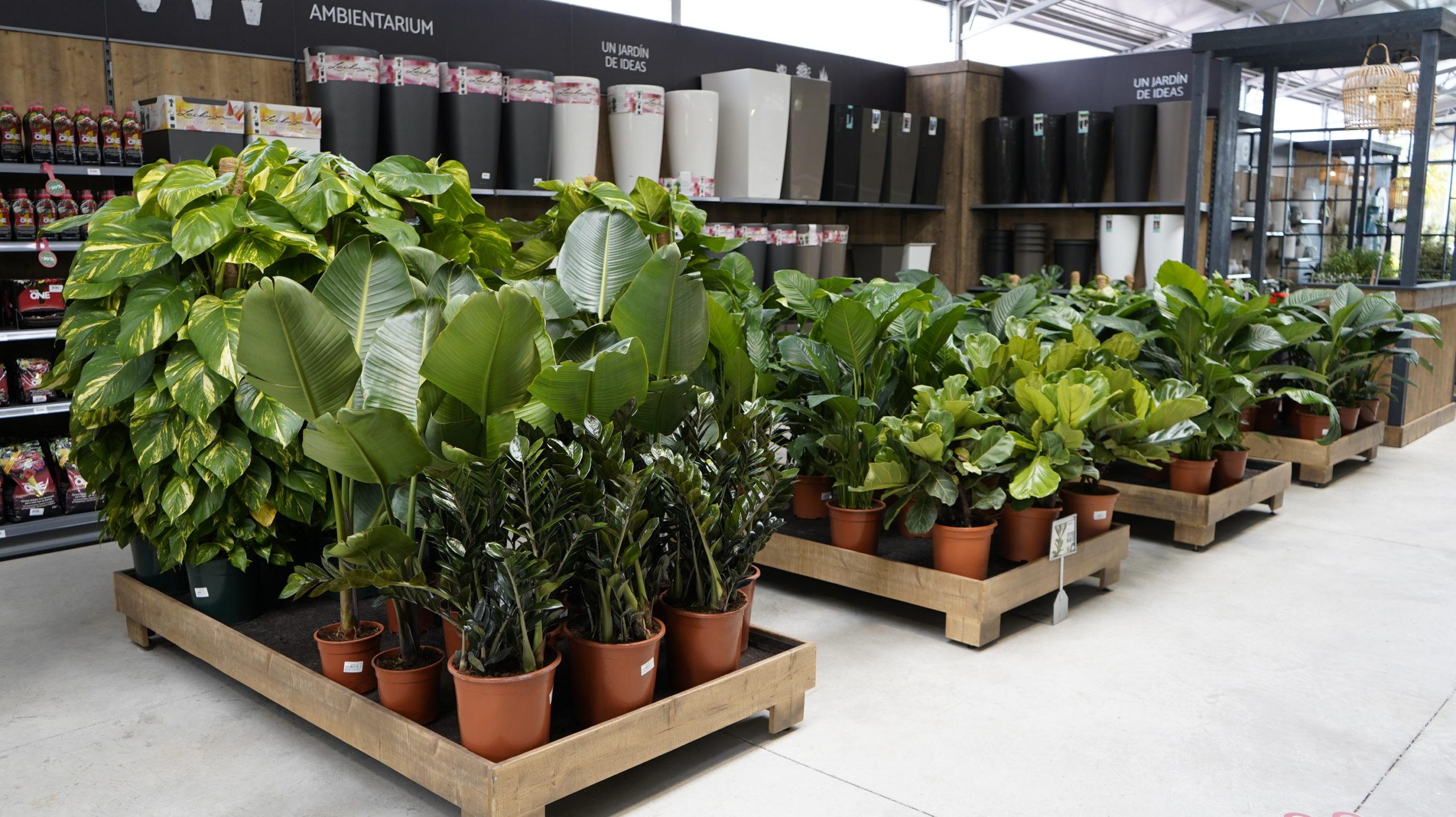 Roots Flores & Plantas Generales 08