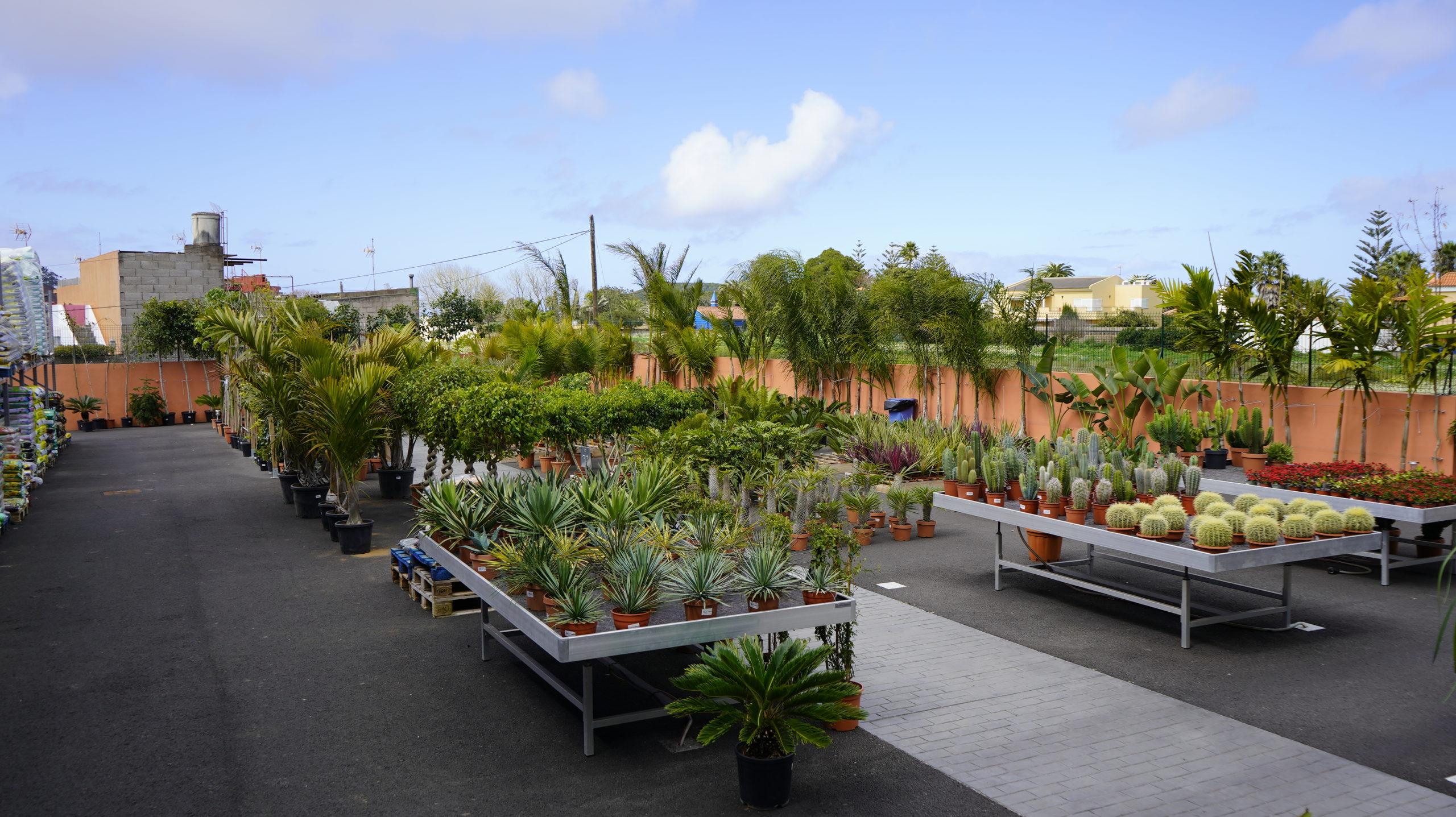 Roots Flores & Plantas Generales 09